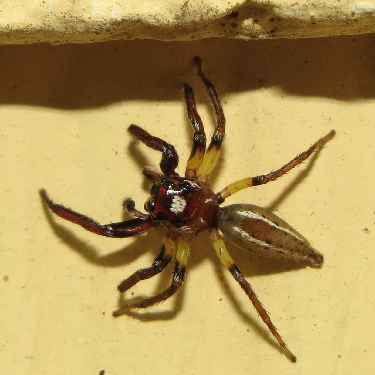 Pictures of spiders in south dakota M: Customer reviews: National Wildlife
