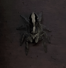 Featured spider picture