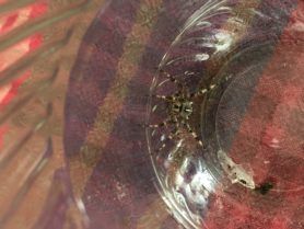 Picture of Araneus diadematus (Cross Orb-weaver)