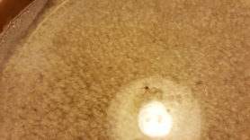 Picture of unidentified spider - Male