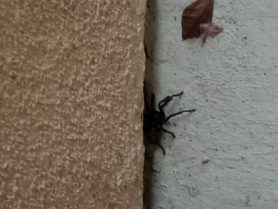 Picture of unidentified spider - Male - Lateral