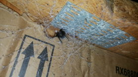 Picture of Kukulcania hibernalis (Southern House Spider) - Eyes,Webs