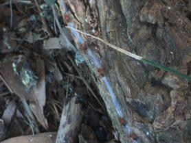 Picture of Ctenizidae (Cork-lid Trapdoor Spiders) - Male,Female - Spiderlings,Webs