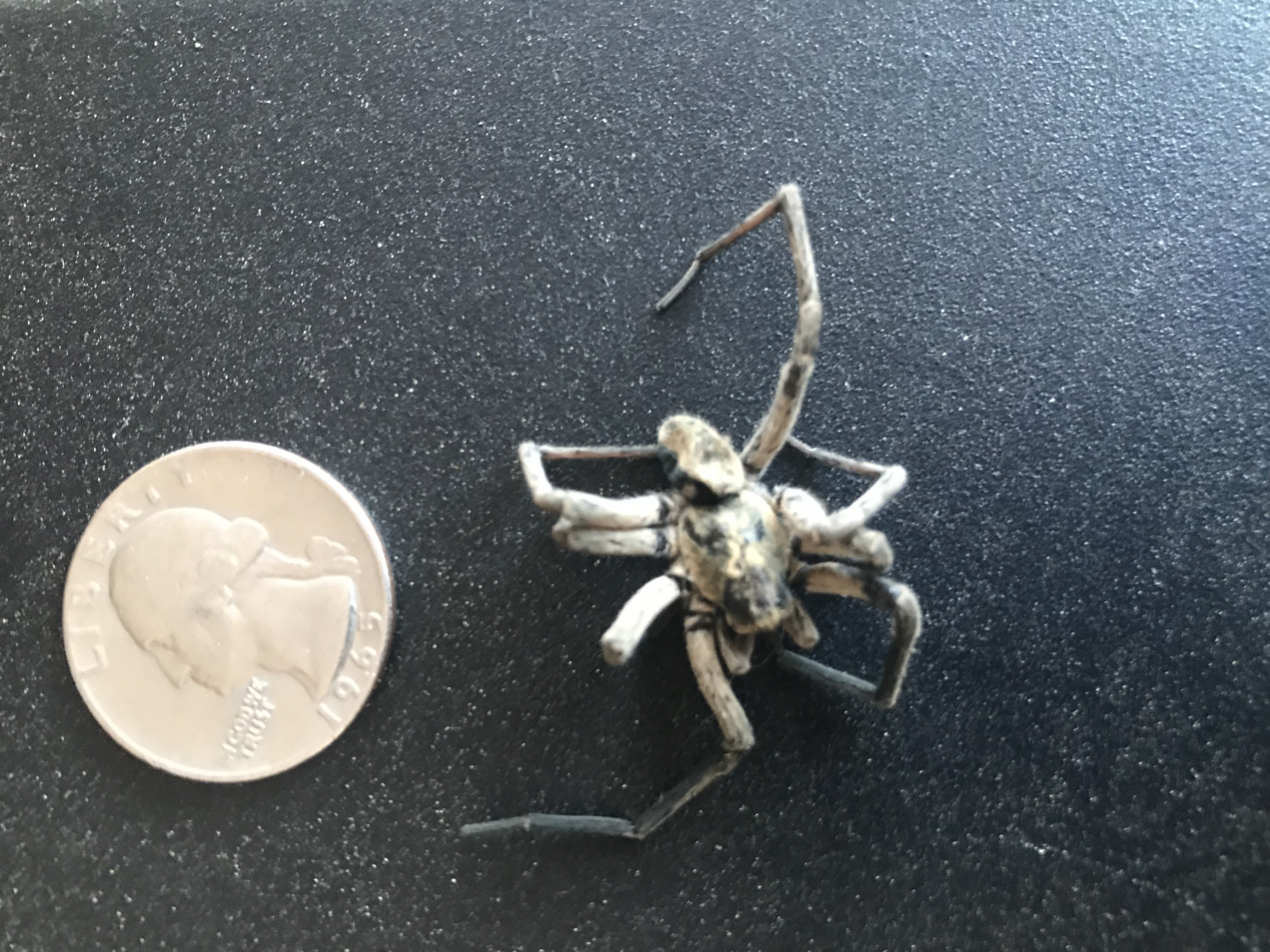 Picture of Geolycosa missouriensis - Male - Dorsal