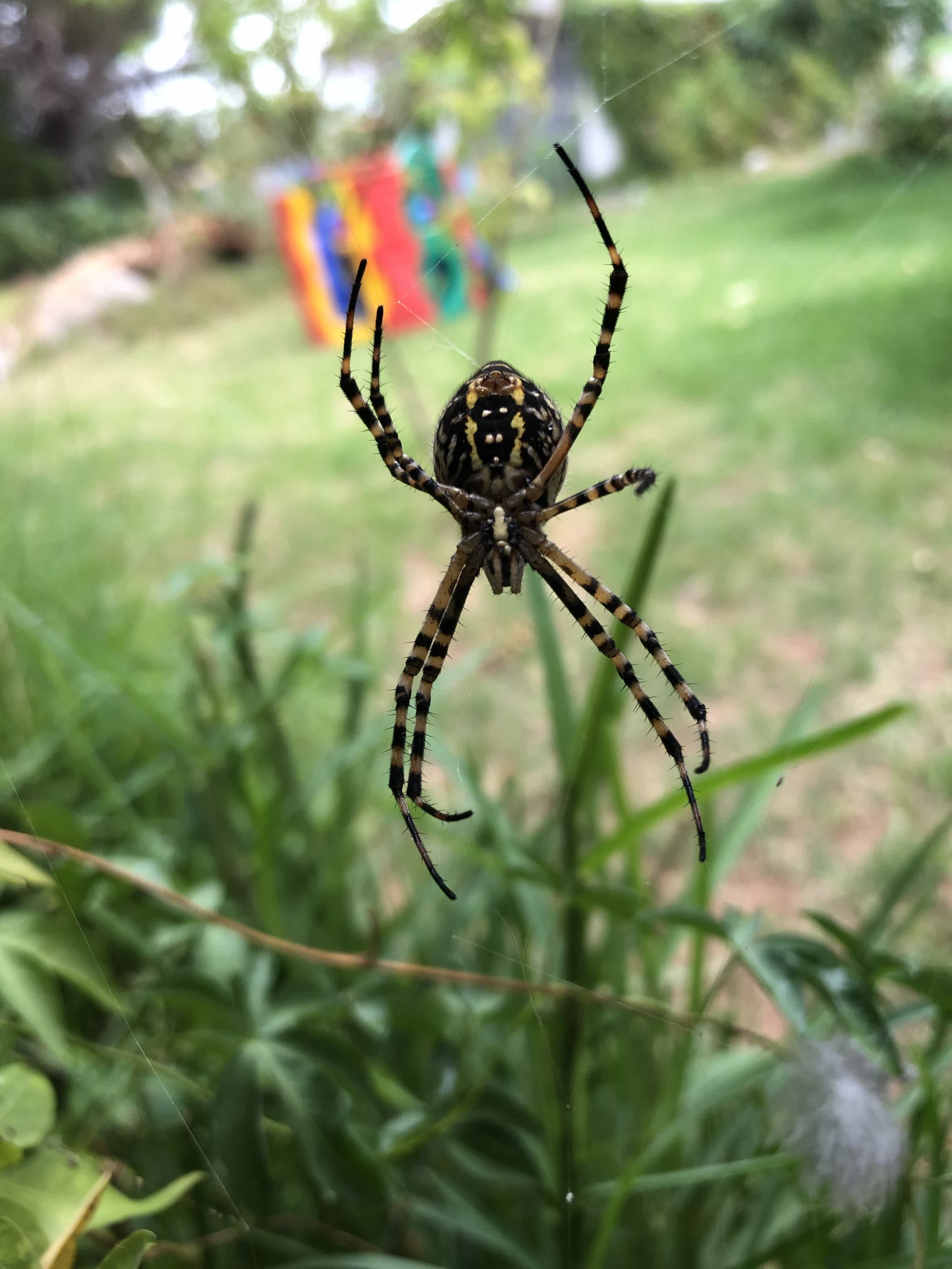 comments id thoughts - Garden Spider