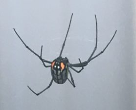 Picture of Leucauge argyrobapta (Mabel Orchard Orb-weaver)