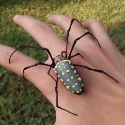 Featured spider picture of Trichonephila antipodiana (Batik Golden Web Spider)