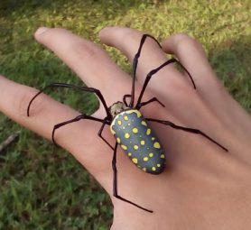 Picture of Nephila antipodiana (Batik Golden Web Spider) - Female - Dorsal