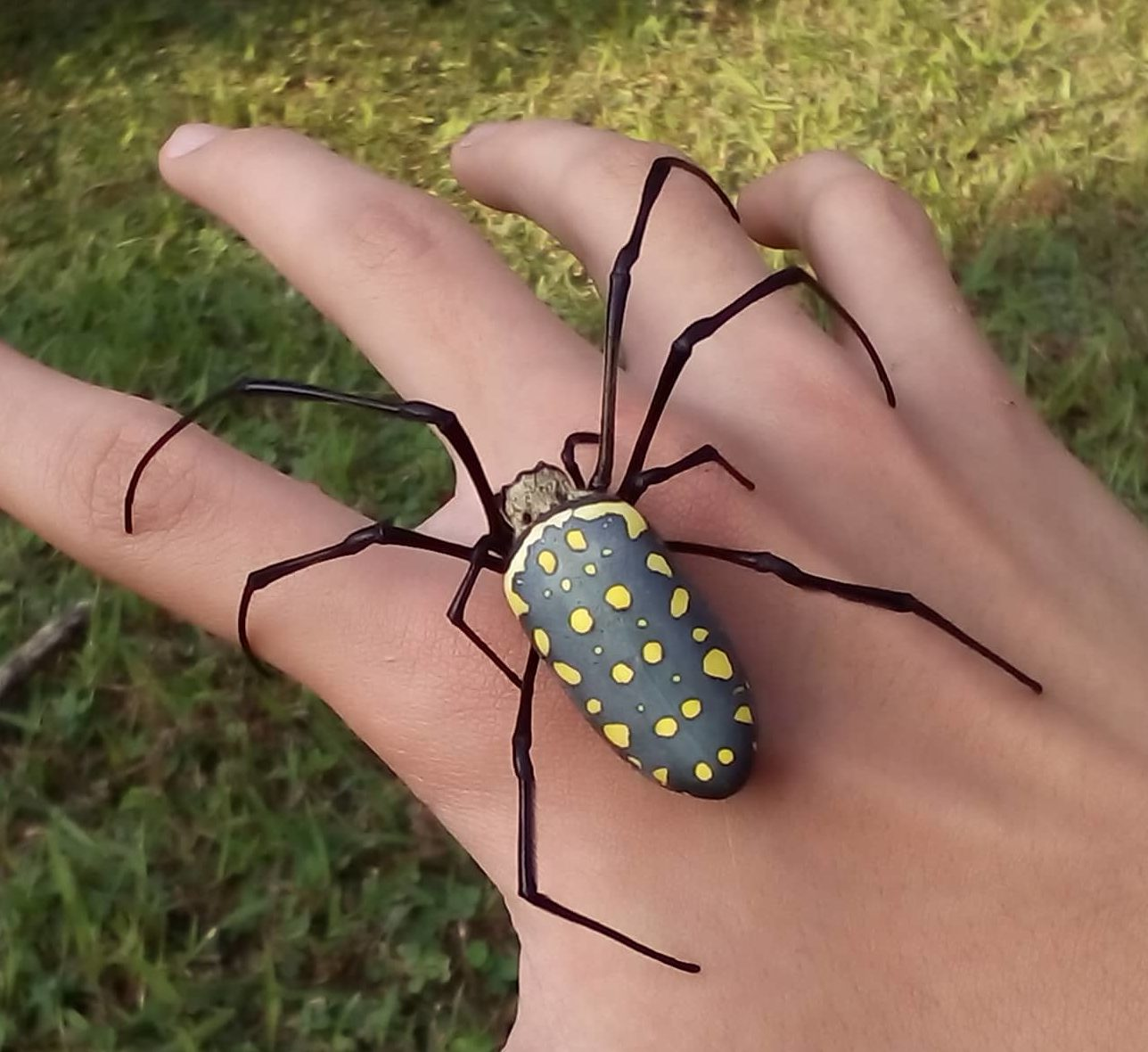 Picture of Trichonephila antipodiana (Batik Golden Web Spider) - Female - Dorsal