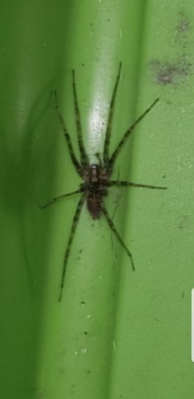 Picture of unidentified spider