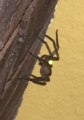 Picture of unidentified spider - Lateral