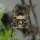 StephCL