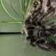 Snakemaster225
