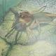 Buggalugs