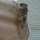 Armadillocat