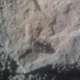 Arachnophobe696